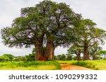 Majestic Baobab Trees Tower...