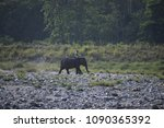 Small photo of wild elephants rare view in manas national park assam india