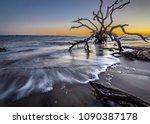 Drift Wood Beach In Jekyll...