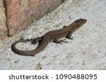 the lizard crawls on the ground | Shutterstock . vector #1090488095