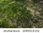 patchy grass growing on lawn | Shutterstock . vector #1090515152