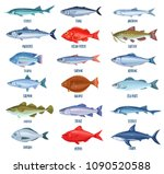 Set Vector Fish. Illustration...