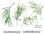 watercolor set with tropical... | Shutterstock . vector #1090585202