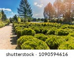 coniferous trees in the outdoor ... | Shutterstock . vector #1090594616