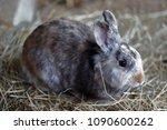 full body of white brown grey... | Shutterstock . vector #1090600262