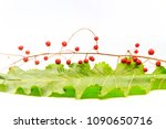green leaf and red berries on a ... | Shutterstock . vector #1090650716