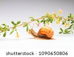 grape snail and colorful... | Shutterstock . vector #1090650806