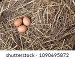 eggs in the straw nest. top... | Shutterstock . vector #1090695872