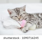 Close Up Baby Kitten Lying On ...