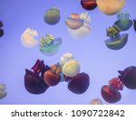 colors jellyfish blubber | Shutterstock . vector #1090722842