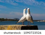 two dainty white seagulls... | Shutterstock . vector #1090723526