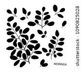 moringa. branch  leaves. black... | Shutterstock .eps vector #1090825028