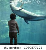 asian toddler looking a dolphin ... | Shutterstock . vector #1090877126