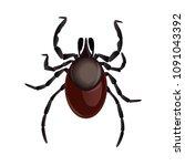 mite parasites. tick parasite....   Shutterstock .eps vector #1091043392