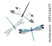 Stock photo watercolor set of dragonfly isolated illustration 1091126675