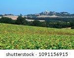 a field of sunflowers ripening... | Shutterstock . vector #1091156915