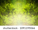 green leaves on a blurred...   Shutterstock . vector #1091195066