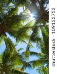 Tops Of Palm Trees In The...