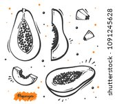 set of papaya exotic fruit in... | Shutterstock .eps vector #1091245628