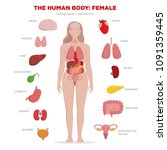 human anatomy infographic... | Shutterstock .eps vector #1091359445