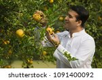 man picking fruit from a tree | Shutterstock . vector #1091400092