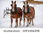 Two Clydesdale In Winter
