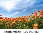 Yellow African Daisy Against A...