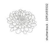 monochrome chrysanthemum flower ... | Shutterstock .eps vector #1091455532