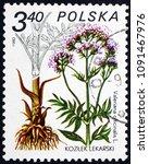 Small photo of POLAND - CIRCA 1980: a stamp printed in Poland shows Valerian, Valeriana Officinalis, Medicinal Plant, circa 1980