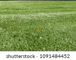 synthetic grass with a few... | Shutterstock . vector #1091484452