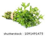thyme fresh herb closeup... | Shutterstock . vector #1091491475