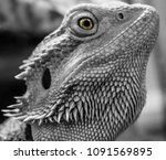 closeup shot of lizard | Shutterstock . vector #1091569895