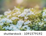 awesome summer background toned ... | Shutterstock . vector #1091579192