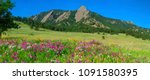 Boulder Colorado Iconic Flatirons with Foreground of Sweet Pea Blossoms