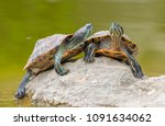 turtle family is calming on the ... | Shutterstock . vector #1091634062