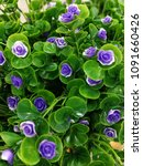 artificial flower image   Shutterstock . vector #1091660426