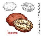 cupuassu fruit sketch of... | Shutterstock .eps vector #1091666048