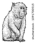 Japanese Snow Monkey Macaque...
