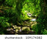 stream in the tropical forest. | Shutterstock . vector #109174382