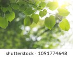 nature background with green... | Shutterstock . vector #1091774648