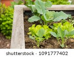 raised bed in a garden with... | Shutterstock . vector #1091777402