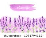 lavender flowers background... | Shutterstock .eps vector #1091794112