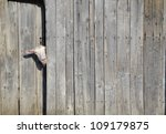 Stock photo curious goat peeking through the door of a wooden shed 109179875