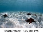 sea stars or starfish over a... | Shutterstock . vector #109181195