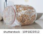 organic alfalfa seeds or... | Shutterstock . vector #1091823512