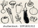 vintage line art vector...   Shutterstock .eps vector #1091831312