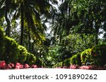 view from the ground of the... | Shutterstock . vector #1091890262