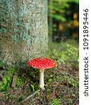 Closeup Of Red Toadstool In Th...