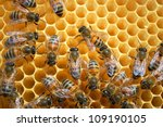 bees on honeycomb | Shutterstock . vector #109190105