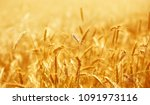 close up of ripe wheat ears.... | Shutterstock . vector #1091973116